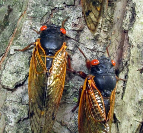 cicada_invasion_3_by_pridescrossing-d3ih2g1