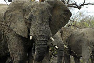 zimbabwe-elephant-2011-09-22