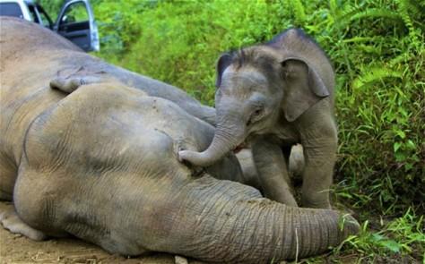 elephant_2464783b