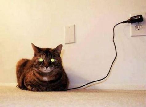 cat-satruday-0