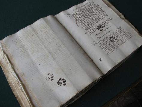 cat-paws