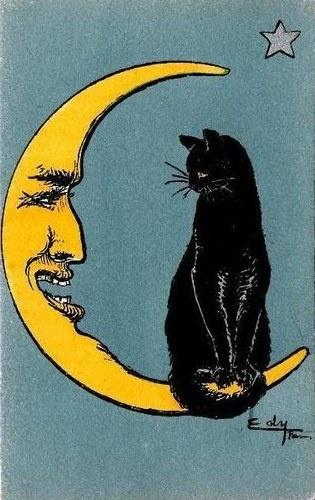 le-chat-et-la-lune