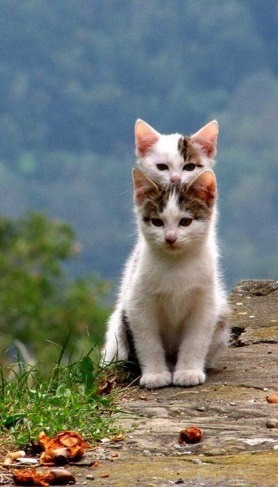 Learn about kittens
