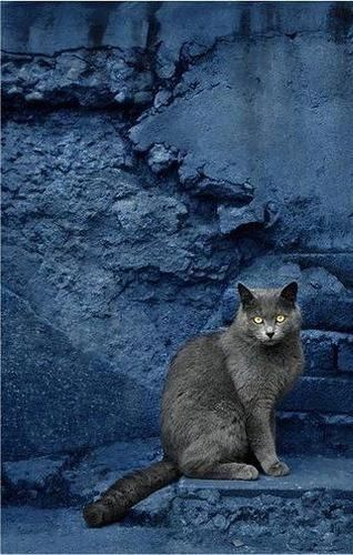 beautiful-contrast-between-the-grey-cat-and-the-crumbling-indigo-blue-wall-just-magical