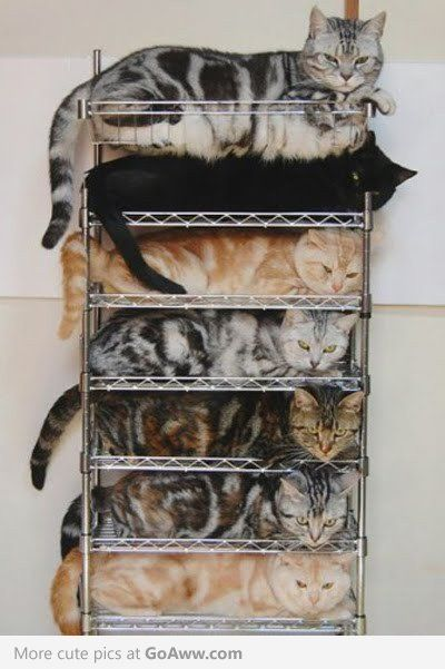 becausenoonelikesadisorganizedpileofkitties
