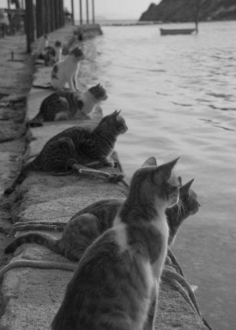 cats-waiting-for-fishermen-to-return