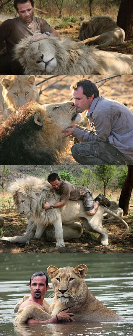 funny-man-kissing-lions-Africa