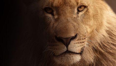 LionProfile_0-1